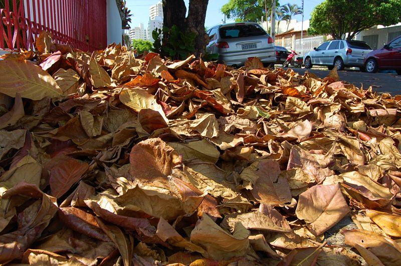 Resultado de imagem para folha seca composto